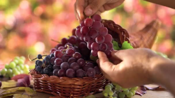 Ripe bunches of grapes in a basket on an old vintage table. Behind a sunny autumn background with beautiful bokeh. Mens hands put one bunch in a basket.