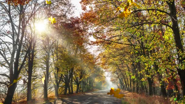 Autumn road with beautiful trees and falling yellow and red leaves.