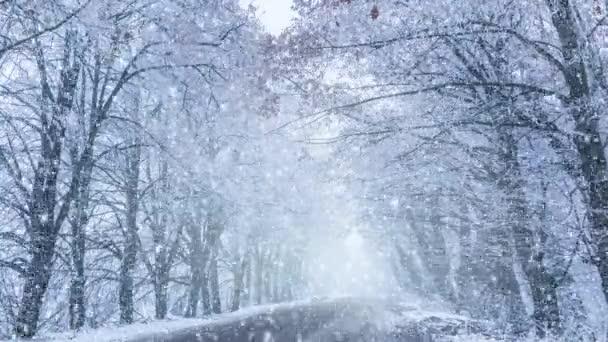 Zimní cesta s krásnými stromy v chatrči s padajícím sněhem.