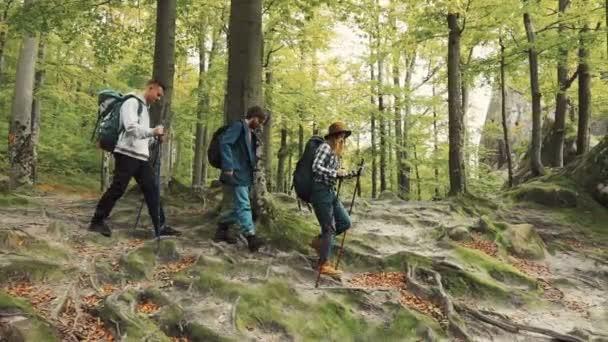 Trekking keresztül erdő
