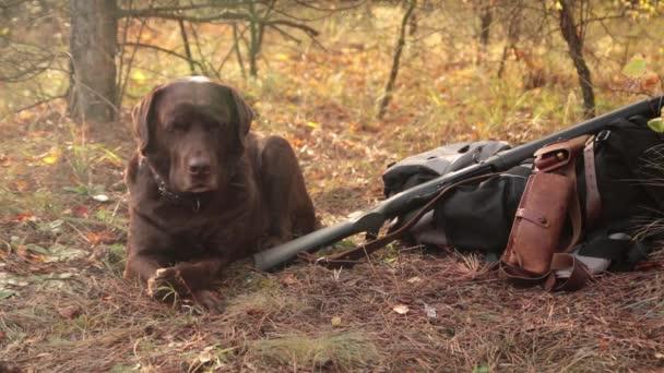 Labrador-dog vadász puskával, a patron öv és a hátizsák az őszi erdő közelében