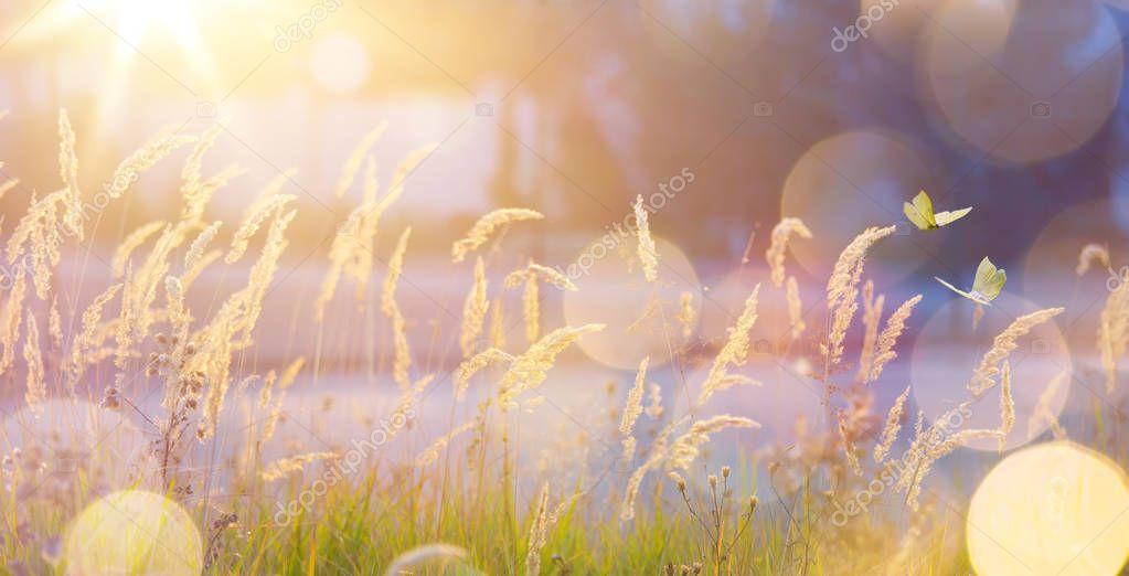 Фотообои Art abstract September sunny autumn meadow backgroun