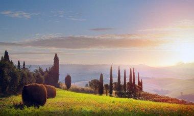 Italy. Tuscany farmland and olives tree; summer countryside Landscape stock vector