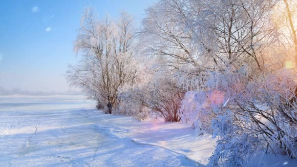 Vánoční světle zimní krajina, padající sníh a sněžný strom,