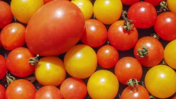 Kirschtomaten (Solanum lycopersicum) Gemüse, vegetarische Kost nützlich als Hintergrund