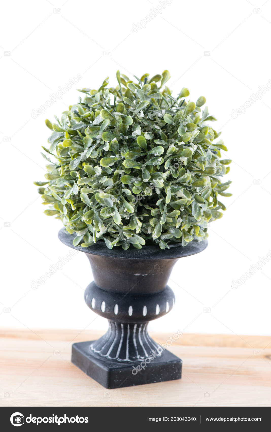 Green Bush With Blue Flowers Isolated Stock Photo Smspsy 203043040