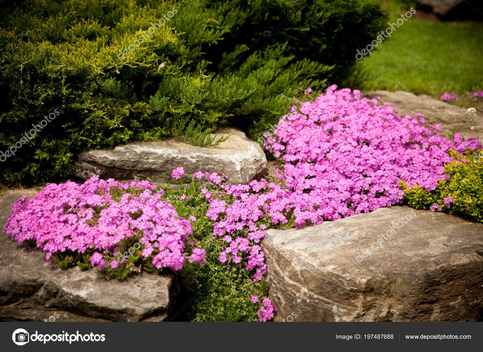 Flowering Rock Garden Spring Different Bushes Flowers Blooming Rock