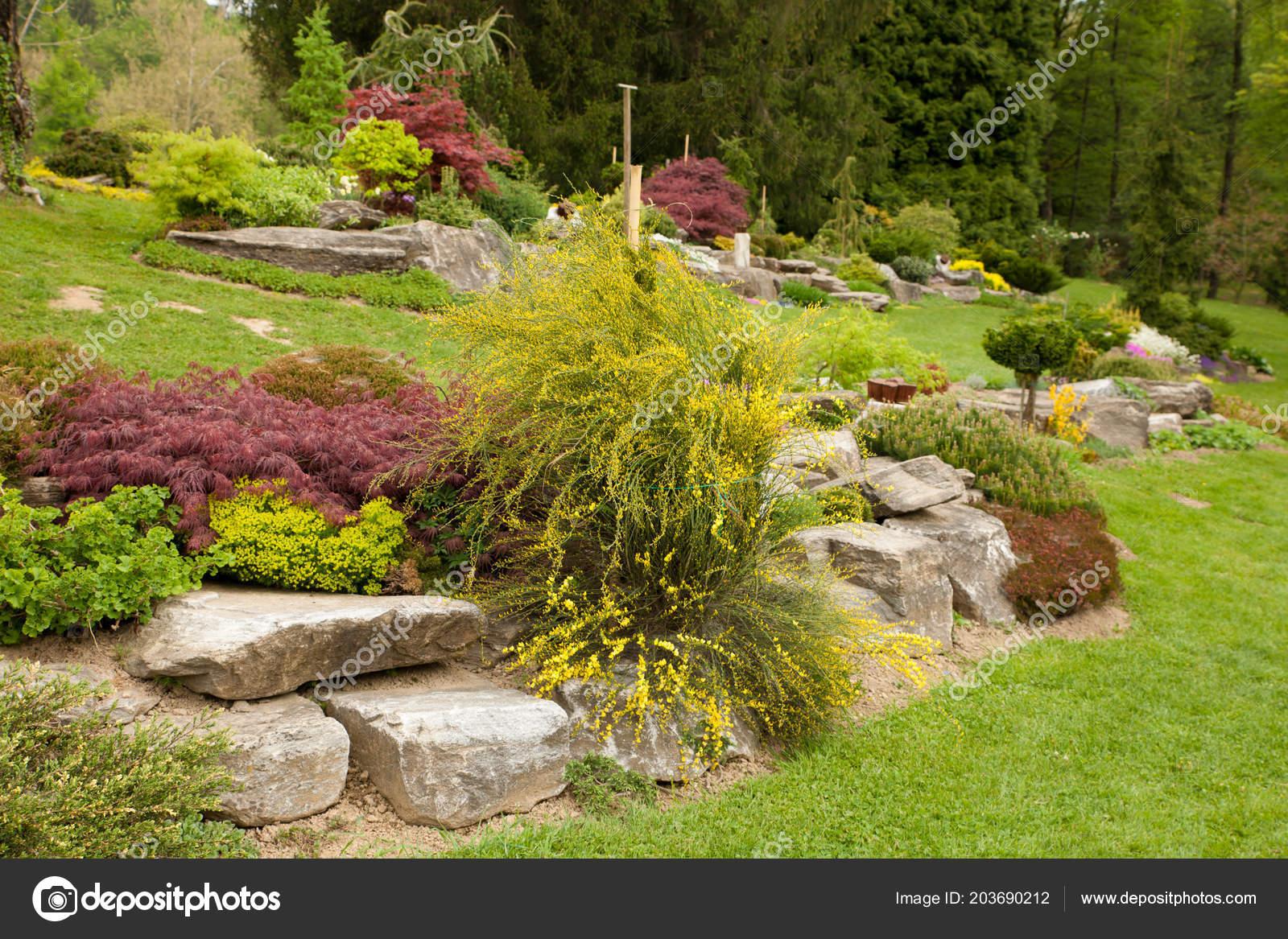 Jardin Rocaille Fleurs Printemps Différents Arbustes Fleurs ...