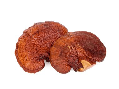 dried lingzhi mushroom isolated on white background