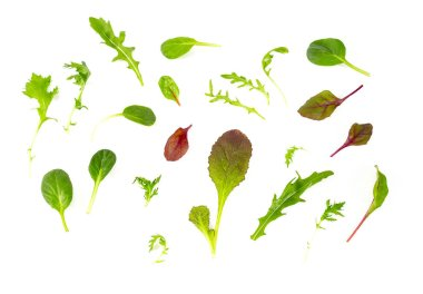 Lettuce mix isolated on white background stock vector