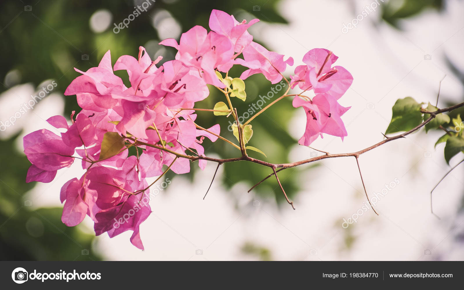 Beautiful pink flowers garden stock photo urickungail beautiful pink flowers in the garden photo by urickungail izmirmasajfo
