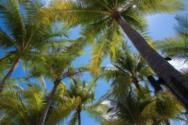 Landscape Sunny day, blue sky and beach,palms