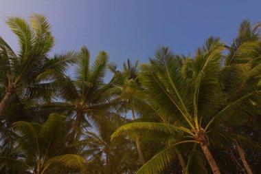 """Картина, постер, плакат, фотообои """"солнечный день, голубое небо и пляж, пальмы """", артикул 233165266"""