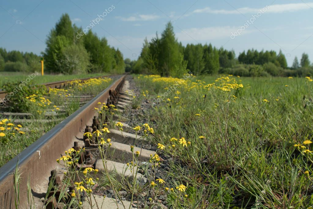 Railroad tracks, rails and sleepers, green grass and flowering dandelions