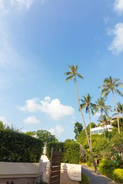 Thailand seascape, beach with palm trees near sea