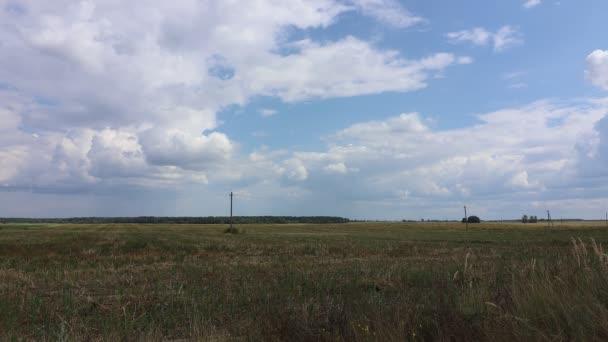 Zöld mező és fű tájképe
