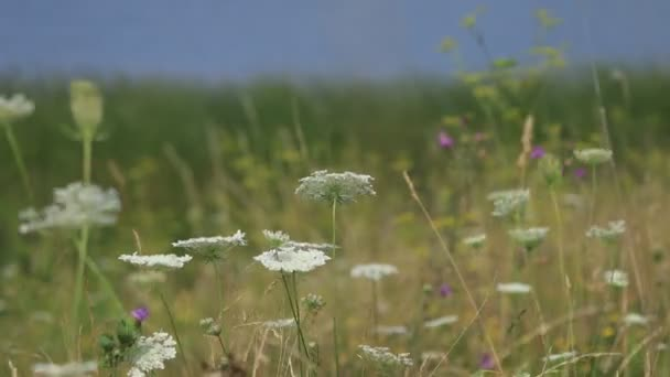 view of field flowers waving on wind at daytime