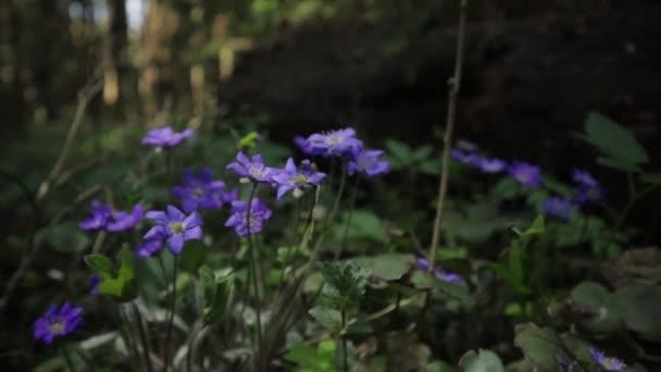 Krásné divoké květiny v lese