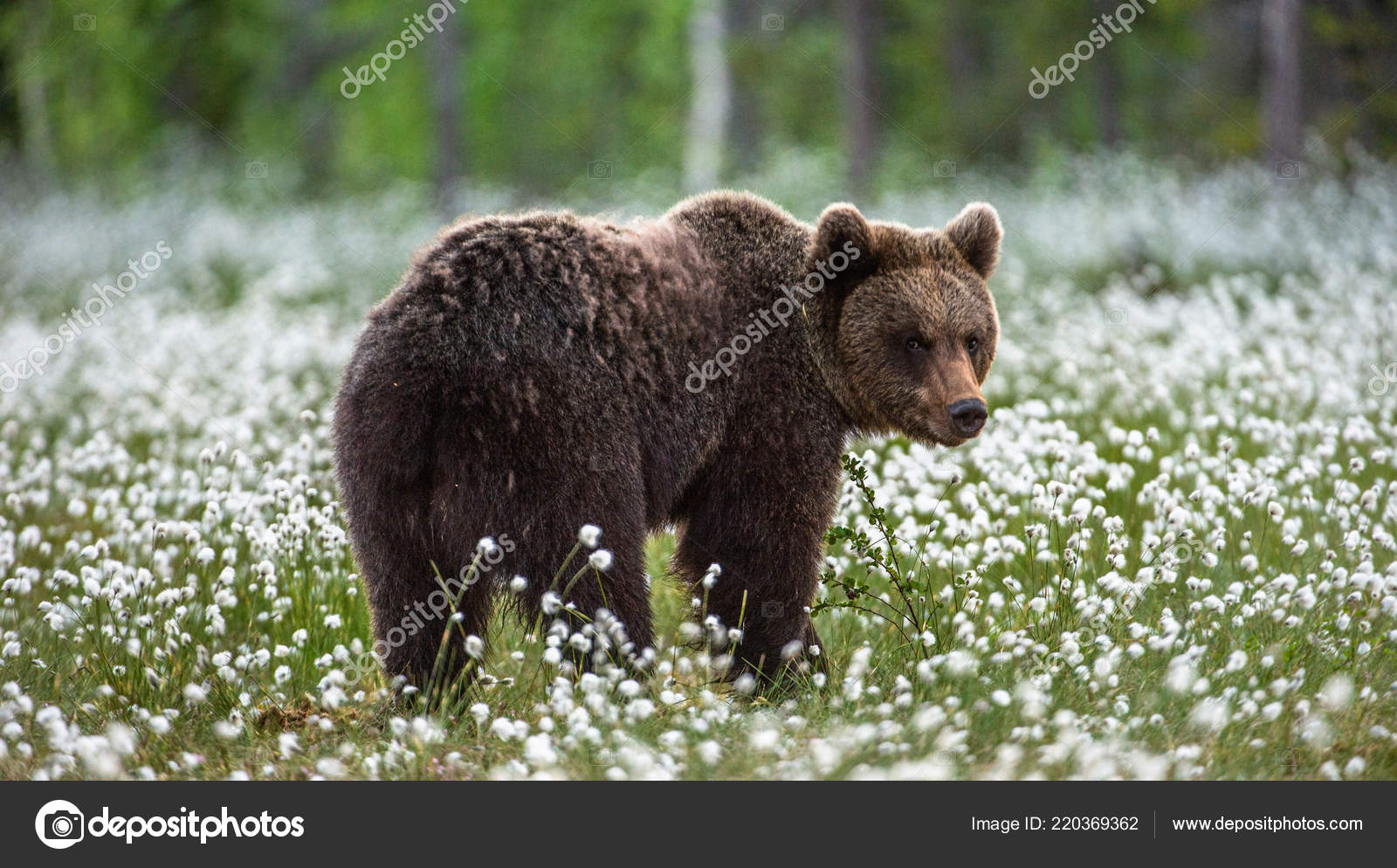 Медведь в лесу цвет