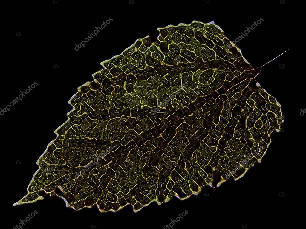 Fractal zoom on a skeleton leaf. Isolated on black. For use in art, design, math and Nature projects.