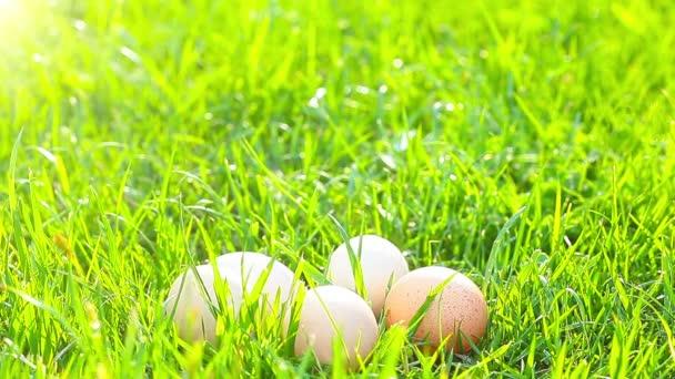 malá kuřata v zelené trávě