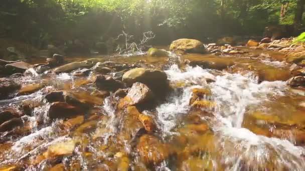 ruscello di montagna nella foresta