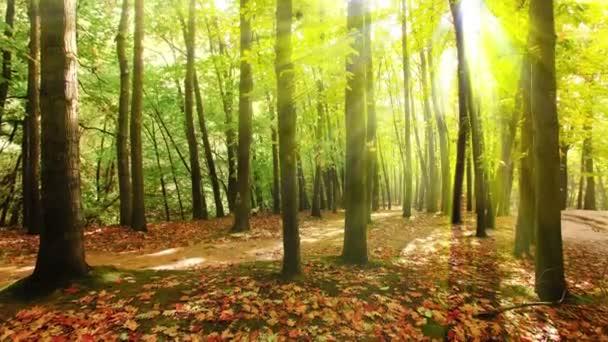 4 k východu v podzimním lese