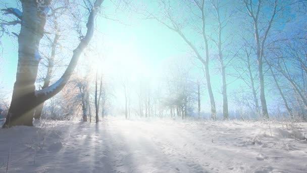 Klesající ve winter parku se sněhem zasněžené stromy