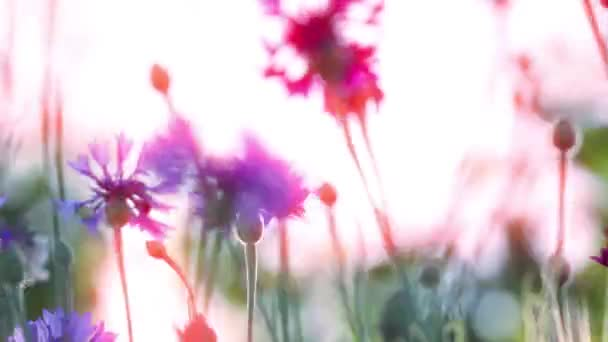 Frühlingsblumen bei Sonnenuntergang