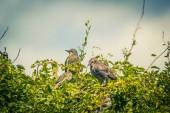 Uccelli, passeri e storni nutrire nel giardino, Chiuda sul colpo