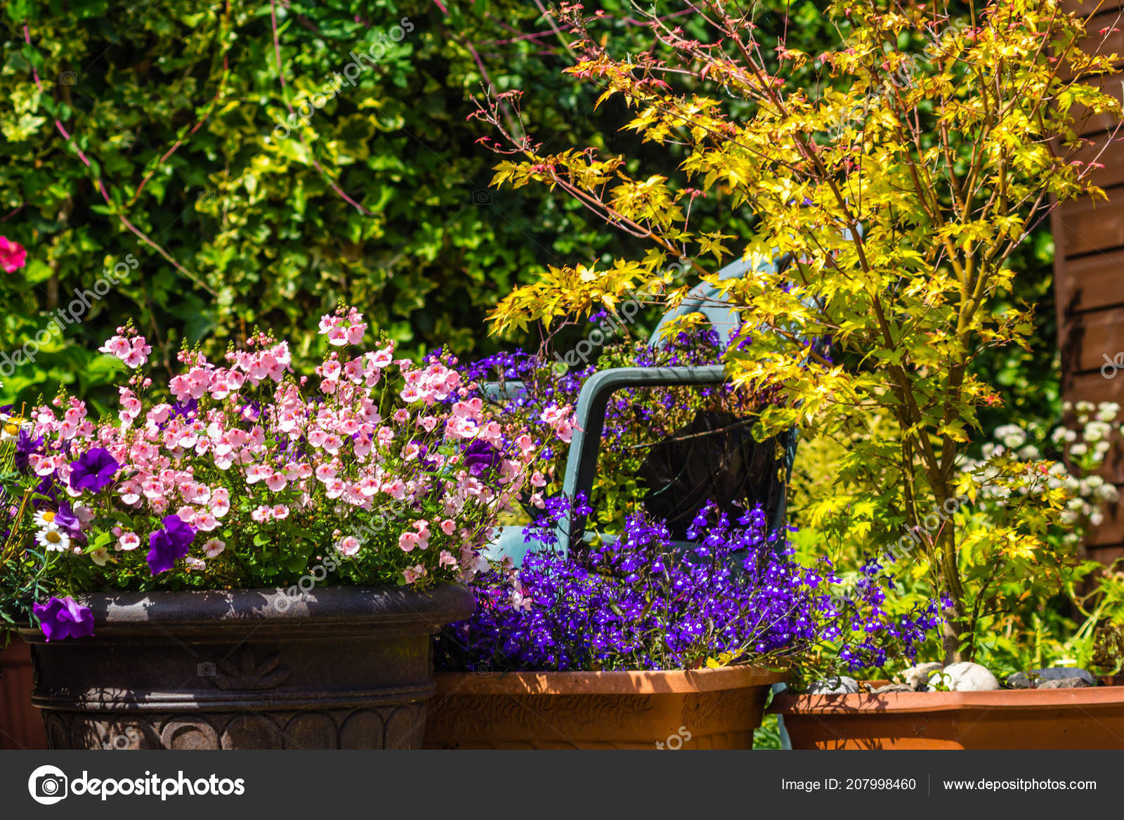 Beautiful Summer Flowers Home Garden Stock Photo Julietart