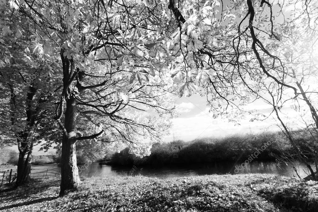 Beautiful autumnal scene in black and white