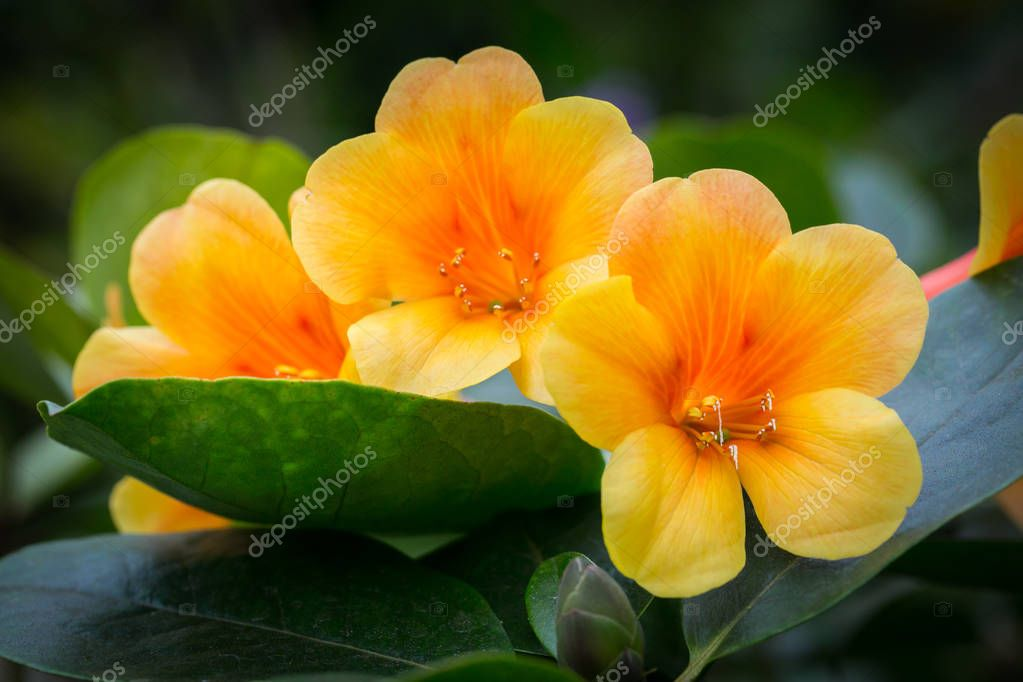 Beautiful flowers in the garden in Singapore.