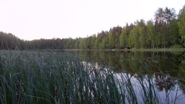 Beautiful finnish lake with green forest background