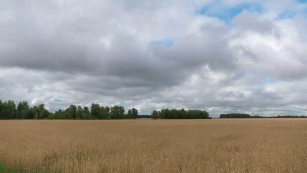 Čas kola krajina pšeničné pole při sklizni.
