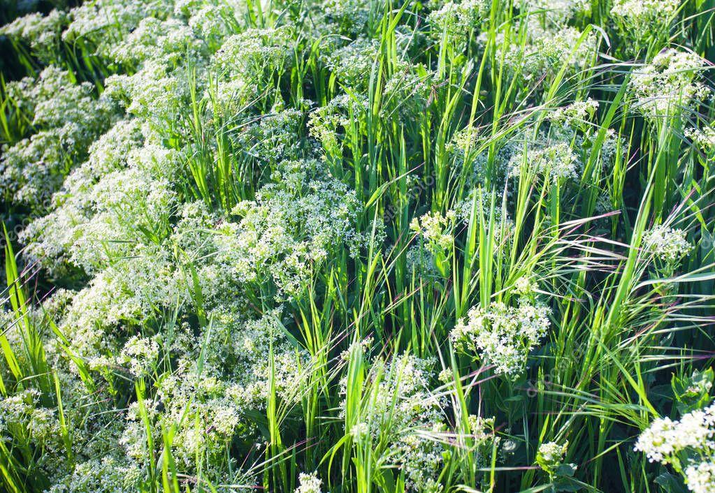 Nature grass flower field