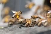 Fotografie Včelí med zblízka