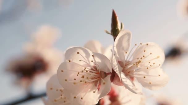 Květiny kvetou na větvích
