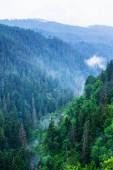 Scénický pohled ze stezky v Národním parku Slovenský ráj, Slovensko