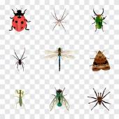 Sada hmyzu realistické symbolů s Pavoukovec, beruška, vosy a další ikony pro váš web mobilní aplikace loga design.