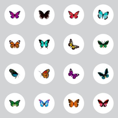 Set of moth realistic symbols with demophoon, hypolimnas, green peacock and other icons for your web mobile app logo design.
