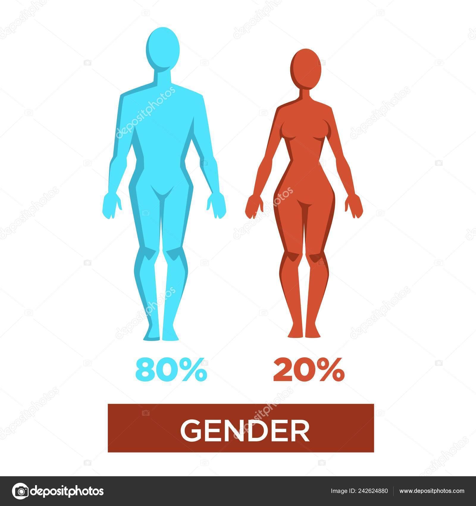 Gender Percentage Masculinity Femininity Vector Isolated