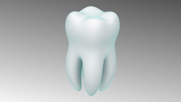 3D-Modell des Zahnes. Schleife.