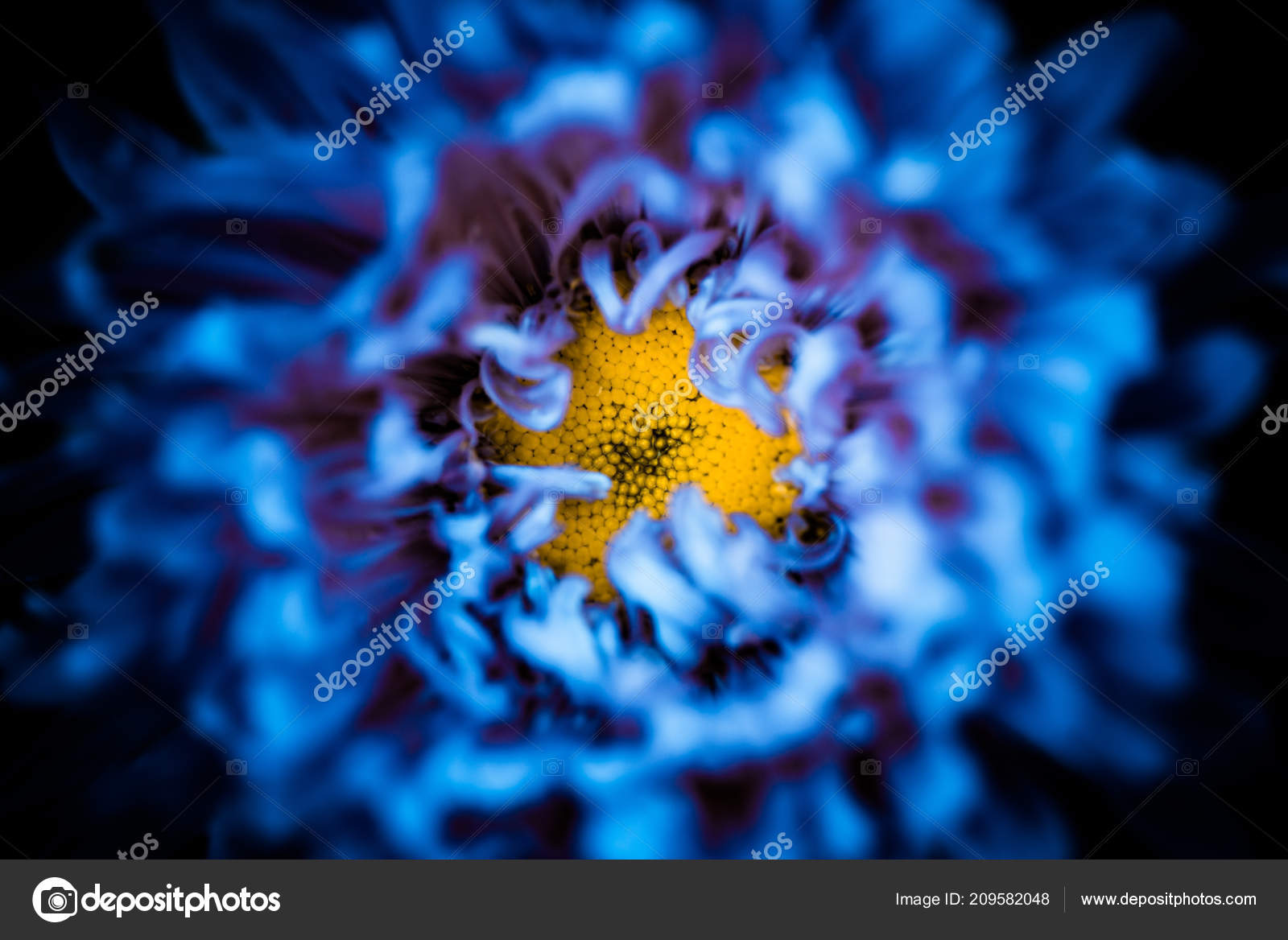 Yellow Center Abstract Blue Flower Leafs Background Stock Photo