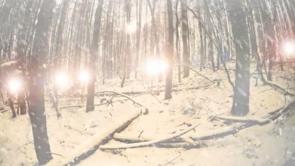 sněhové vločky padající v zimním lese s tlumená světélka na obzoru