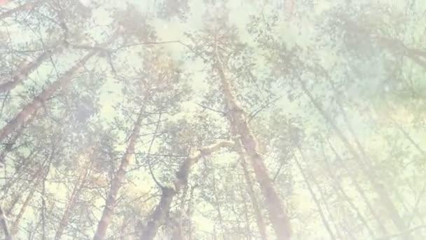sněhové vločky padající na zimních lesních borovic