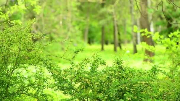 zelené jarní parky stromy malebné v nových Bushových větvích
