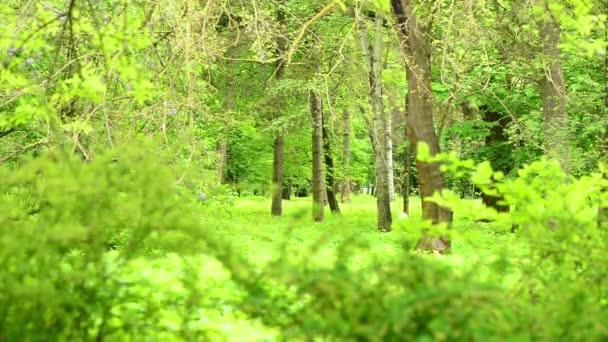 Zöld tavaszi Park fák Scenic keresztül friss bokor ágak