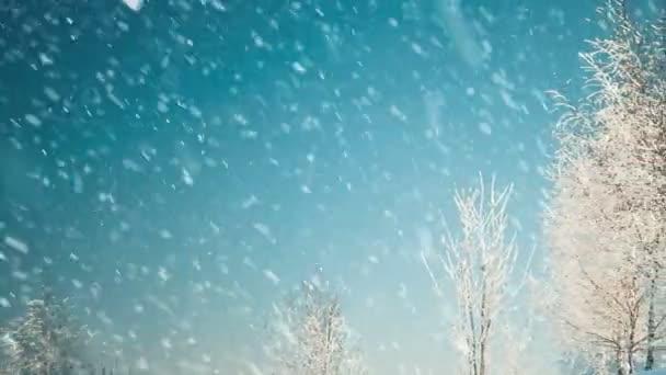 zimní stromy pokryté sněhem na modré obloze pozadí pod padajícím sněhem