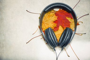 earphones with colorful maple leafs inside on rough grey stone texture